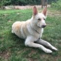 joel's dog cooper