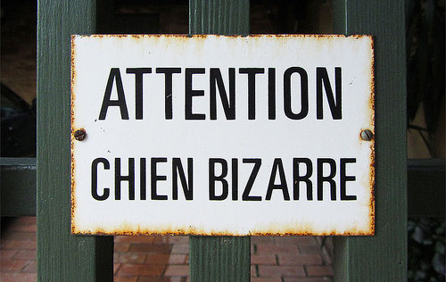 attention chien bizarre