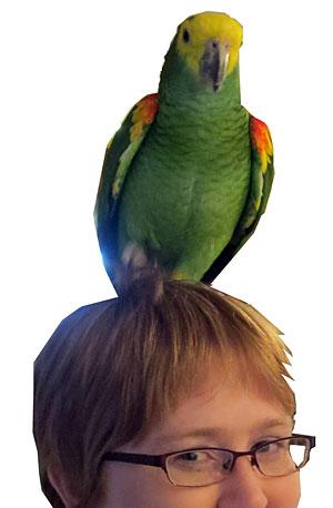 bird pet sitting