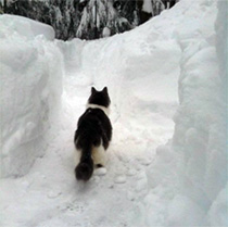 Bob in Snow Maze