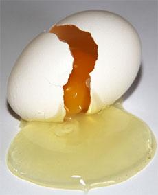broken humpty egg