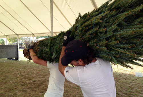 carrying christmas trees