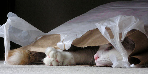 cat in grocery bag ftw