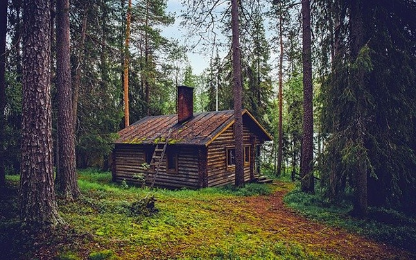 cute cabin in the woods