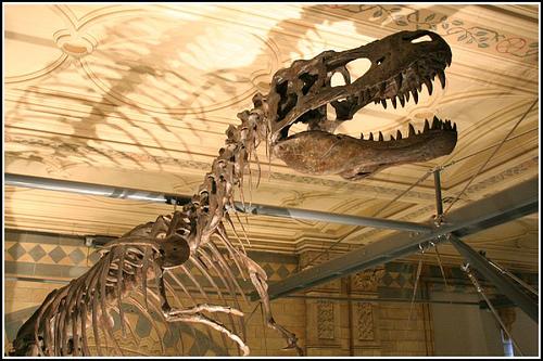 dinosaur bones - skeleton