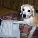 dog working computer