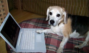 dog working computer