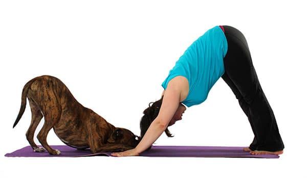 doga - dog yoga