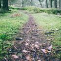 epiphany path