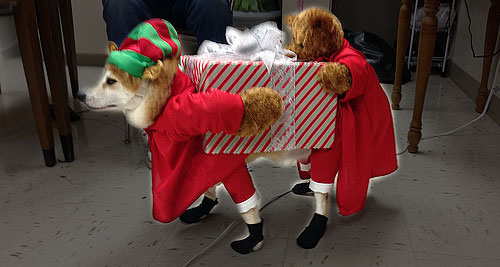 funny christmas gift dog costume