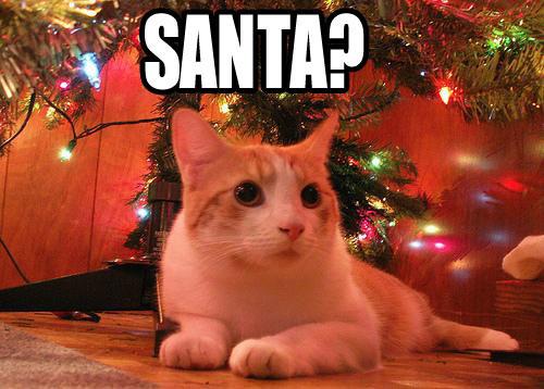 funny santa lol cat