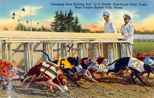 greyhound racing postcard