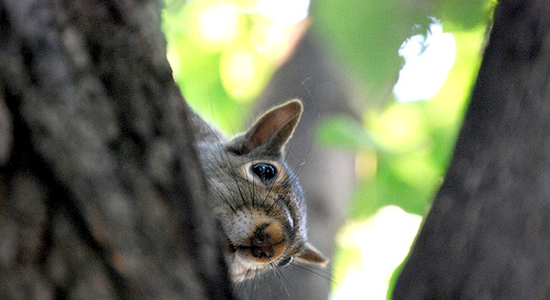 hide and seek squirrel