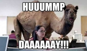 hump day camel geico