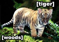 Literal Tiger Woods