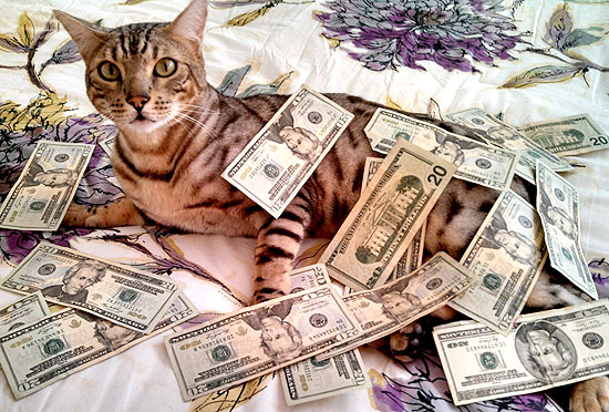 make it rain lol cat