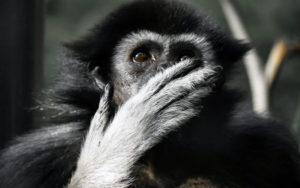 monkey shock