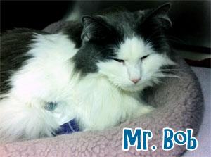 Mr. Bob Cat