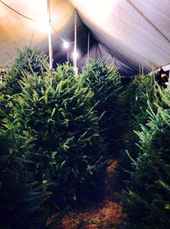 narnia christmas tree stand