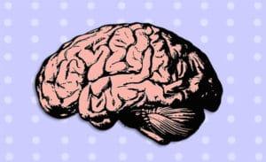 polka dot brain