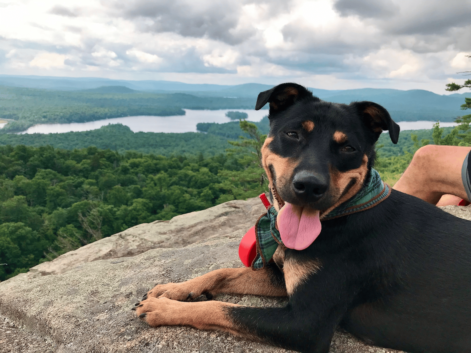 happy dog on a hike