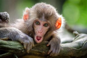 schocked monkey