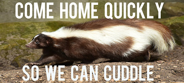 skunk cuddle