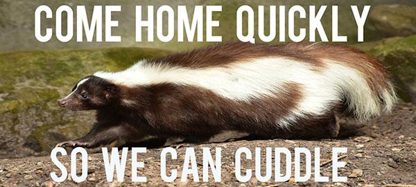 skunk cuddle