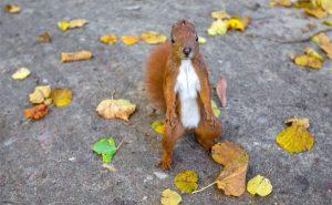 squirrel saver
