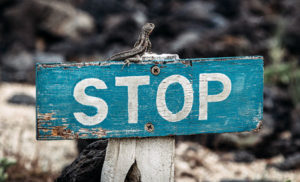 stop sign lizard