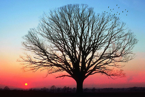 awesome sunset tree