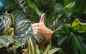 thumbs up jungle