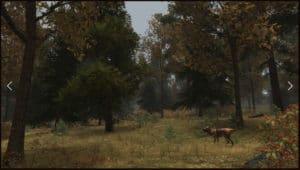 walden game - forest