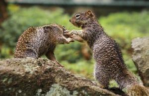 wallet squirrels