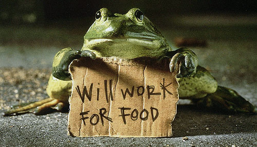 will work for food frog sign